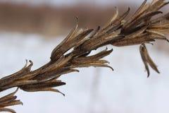 Plante en el invierno 1 Fotos de archivo