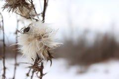 Plante en el invierno 3 Foto de archivo libre de regalías