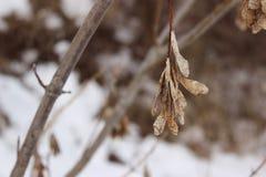 Plante en el invierno 4 Foto de archivo libre de regalías