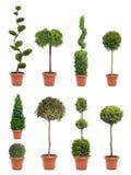Plante en pot de jardin Images libres de droits