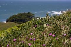 Plante et fleurs de glace au-dessus de regarder l'océan Photographie stock libre de droits