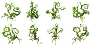 Plante grimpante stylisée, fond transparent de png Photos stock
