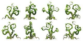 Plante grimpante stylisée, fond transparent de png Photographie stock libre de droits