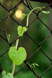 Plante grimpante sur la barrière en acier de maille Photo libre de droits