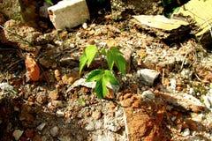 Plante isolée et verte à l'arrière-plan bricky 3 images libres de droits