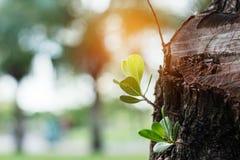 Plante l'élevage des tronçons Images stock
