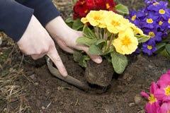 Plante las flores Foto de archivo