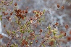 Plante las ramas con una profundidad del campo baja Fotografía de archivo libre de regalías