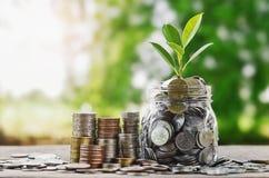 Plante moedas crescentes no frasco de vidro com o concentrado financeiro do investimento fotos de stock royalty free
