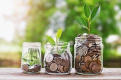 Plante moedas crescentes no frasco de vidro com o concentrado financeiro do investimento Fotografia de Stock Royalty Free
