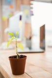 Plante na frente de uma mesa de trabalho criativa Fotografia de Stock Royalty Free