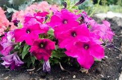 Plante o outono 5 do verão das pinturas do parque das hortaliças das flores Fotos de Stock Royalty Free