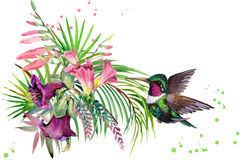 plante, oiseau et fleurs de jungle colibri illustration d'aquarelle de forêt tropicale illustration libre de droits