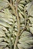 Plante ornementale Image stock