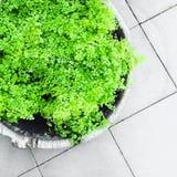 Une plante verte dans un pot gris illustration de vecteur for Plante ornementale