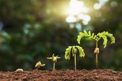plante a semeação da etapa crescente com luz solar com filte do tom do vintage fotografia de stock
