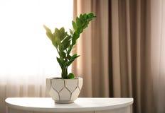 Plante tropicale sur la table contre la fenêtre photos stock