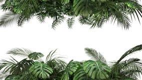 Plante tropicale sur un fond blanc banque de vidéos