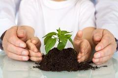 Plante um conceito do ambiente do seedling hoje - Fotografia de Stock Royalty Free