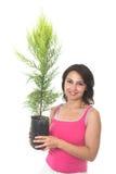 Plante uma árvore foto de stock