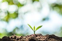 Plante uma árvore na natureza foto de stock