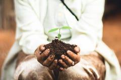 Plante uma árvore o solo e as plântulas no ` s da avó entregam fotografia de stock