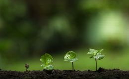 Plante uma árvore, proteja a árvore, ajuda da mão a árvore, etapa crescente, molhando uma árvore, árvore do cuidado, fundo da nat Imagem de Stock