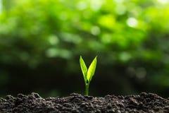 Plante un árbol en naturaleza fotografía de archivo