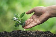 Plante un árbol que riega en el establecimiento de la mano de la naturaleza imagenes de archivo