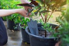 Plante un árbol y afloje el suelo foto de archivo libre de regalías