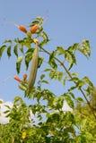 Plante un arbusto en un fondo Imagen de archivo