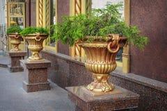 Plante verte à l'intérieur de grand vase concret sur la rue de ville Photos stock
