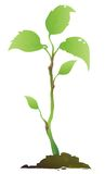 Plante verte illustration de vecteur