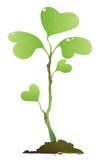 Plante verte illustration stock