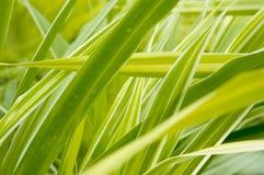Plante verte Photo stock