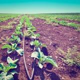 Plante verte Images libres de droits