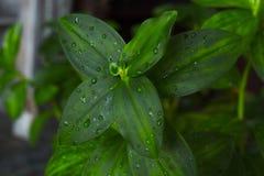 Plante verte images stock