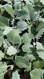 Plante verte Photographie stock