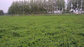 Plante verte Image stock