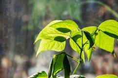 Plante verte allumée par la fin du soleil images libres de droits