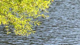 Plante verte au soleil et lac banque de vidéos
