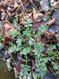 Plante verte avec des baisses de rosée photo stock