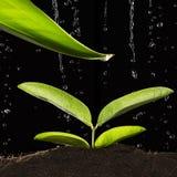 Plante verte avec la baisse de l'eau Photographie stock