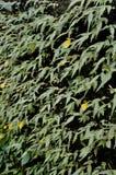 Plante verte avec la fleur jaune sur la roche de moise Photographie stock libre de droits