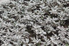 Plante verte blanche Photos libres de droits