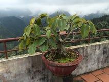 Plante verte contre la vue montagneuse Image libre de droits