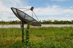 Plante verte cultivant sur l'antenne parabolique au-dessus du ciel bleu Image libre de droits