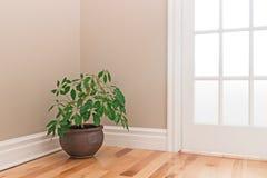 Plante verte décorant un coin de pièce Photo libre de droits
