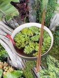 Plante verte dans la proue de nouille photo libre de droits