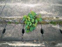 Plante verte dans la route goudronnée criquée image libre de droits